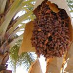 منتجات جديدة من التمور في مهرجان ليوا للرّطب