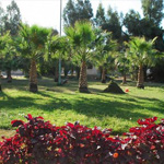 50 حديقة بالطائف تستقطب 10 آلاف طفل في العطلة