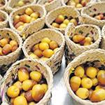 مهرجان ليوا للرطب يبدأ 18 يوليو في أجواء رمضانية