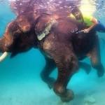حمدان بن محمد يسبح مع «الفيل الأخير»