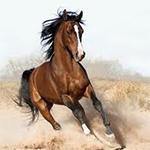 """قصيدة محمد بن راشد""""العاديات""""رداً على """"سلام من فزاع لأهل الهجن""""لحمدان بن محمد"""