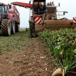 تحذير من اندثار الزراعة في العالم بسبب تآكل التربة