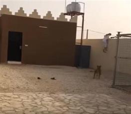 بالفيديو – «شاب» يركض هرباً من «نمر» داخل استراحة