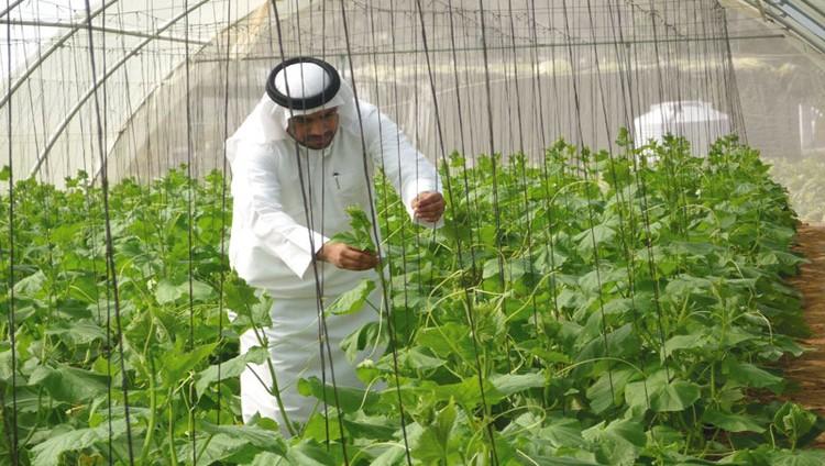 «التغيّر المناخي»: خطة وطنية للتحوّل التدريجي نحو «التمكين الزراعي الذكي»