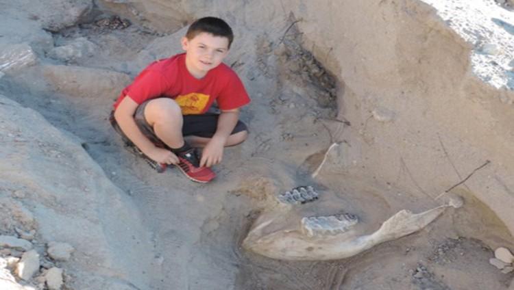 ابن التاسعة يكتشف أحفورة عمرها 1.2 مليون عام