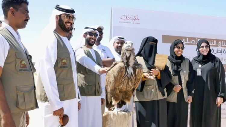 بلدية دبي تنقذ نسر «الرأس المجعّد» عبر الأقمار الصناعية