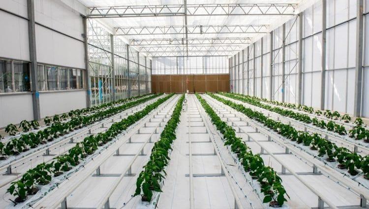 الإمارات تعزز الأمن الغذائي بالأبحاث والتقنيات الزراعية