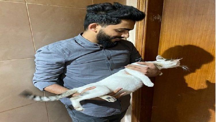 منقذو قطة علقت بشرفة: الإمارات تكرم كل من يعيش على أرضها